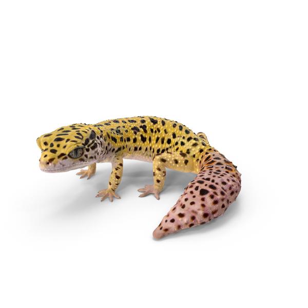 Leopard Gecko Object