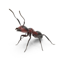 Red Ant PNG & PSD Images