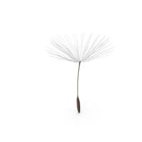 Dandelion Seed PNG & PSD Images