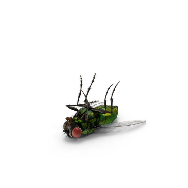 Green Bottle Fly Object