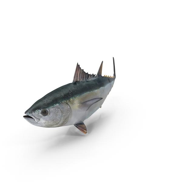 Tuna Fish Object