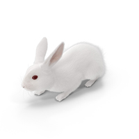 White Rabbit PNG & PSD Images