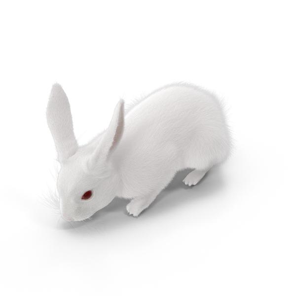 White Rabbit Eating Object