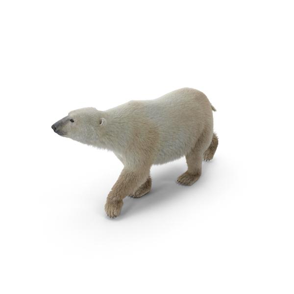 Polar Bear Object