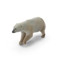 Polar Bear PNG & PSD Images