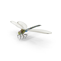 Dragonfly PNG & PSD Images
