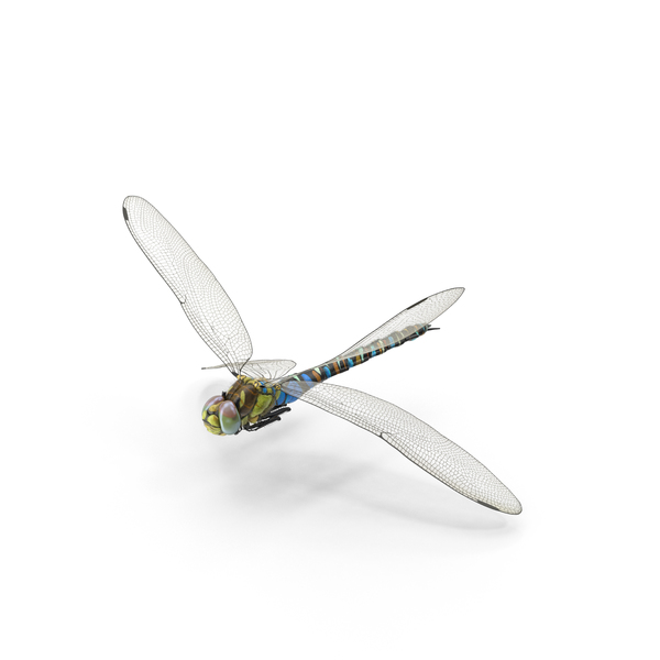 Dragonfly Object