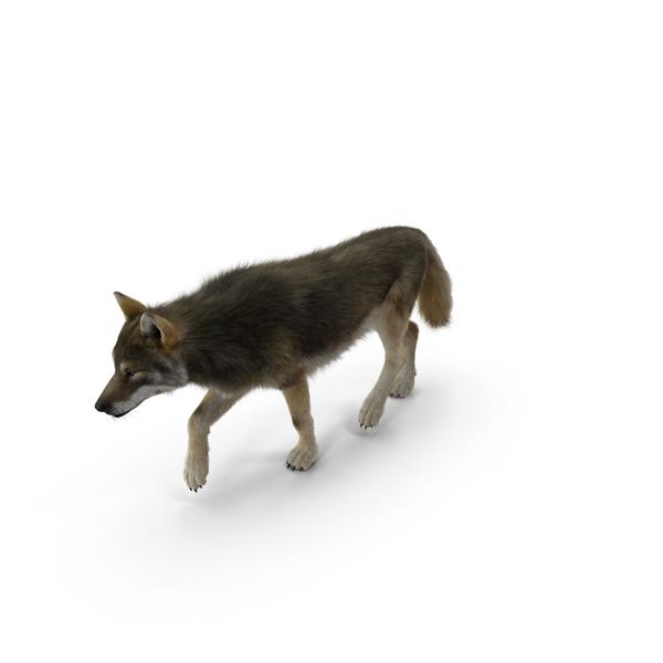 Grey Wolf Object