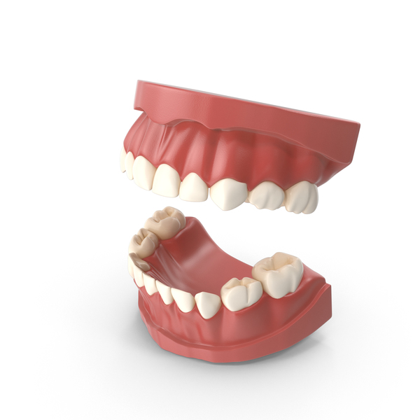 Teeth Primary PNG & PSD Images