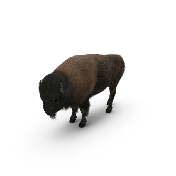 American Bison Object