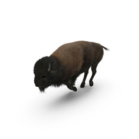 American Bison Running PNG & PSD Images