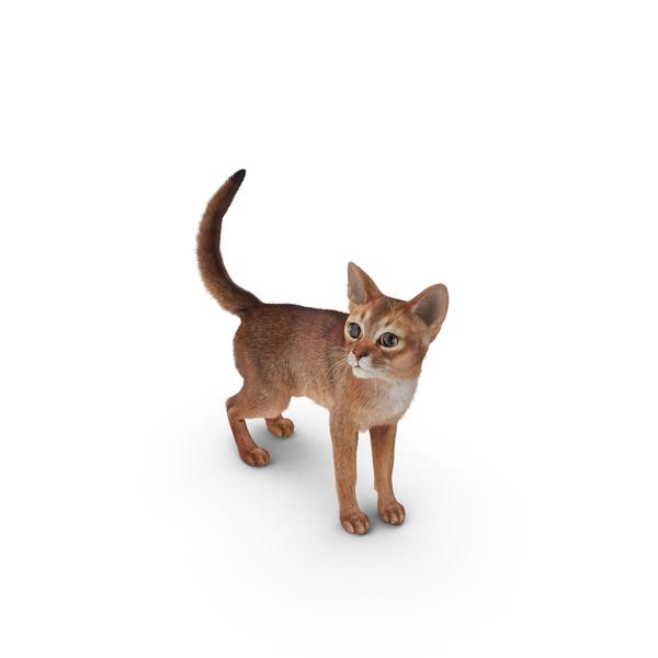 Abyssinian Cat Object