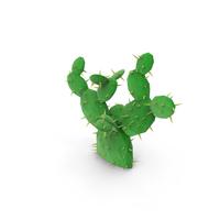 Low Poly Cactus PNG & PSD Images