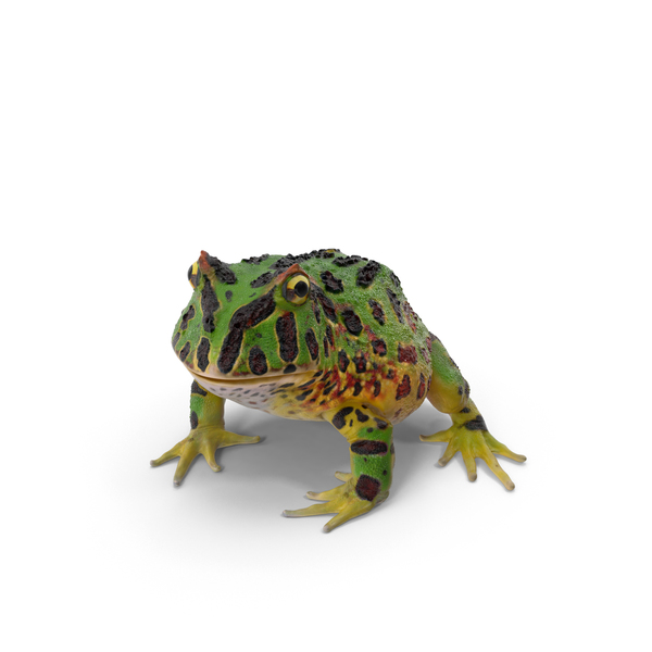 Pacman Frog Object
