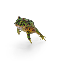 Pacman Frog PNG & PSD Images