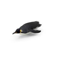 Emperor Penguin Sliding PNG & PSD Images