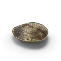 Clam PNG & PSD Images