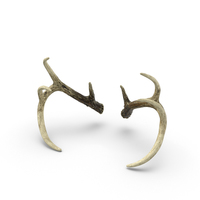 Antlers PNG & PSD Images