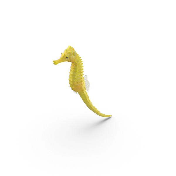 Yellow Seahorse with Tail Extended PNG & PSD Images