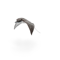 Eagle Ray PNG & PSD Images