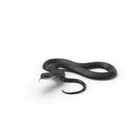 Black Snake PNG & PSD Images