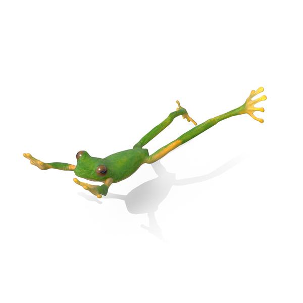 Tree Frog Object
