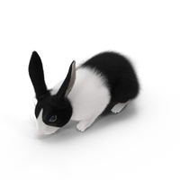 Black and White Rabbit PNG & PSD Images