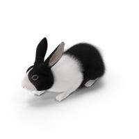 Black Rabbit PNG & PSD Images