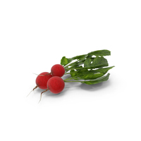 Radishes PNG & PSD Images