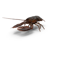 Lobster PNG & PSD Images