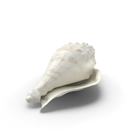 White Conch Shell PNG & PSD Images