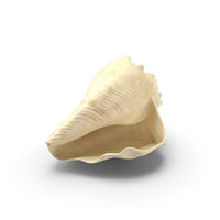 Horse Conch Shell PNG & PSD Images