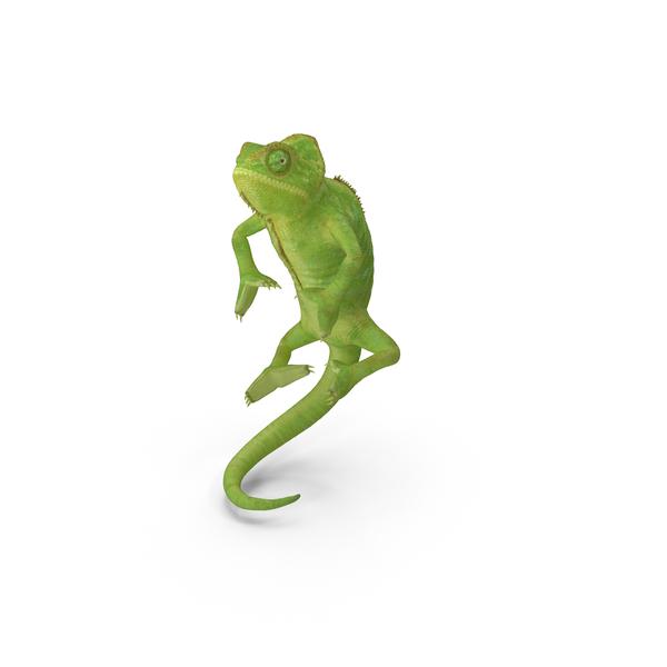 Chameleon Climbing Pose Object