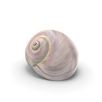 Sharkeye Moon Shell PNG & PSD Images