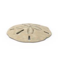 Keyhole Sand Dollar PNG & PSD Images