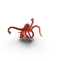 Octopus PNG & PSD Images