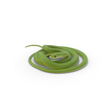 Green Snake Coiled PNG & PSD Images