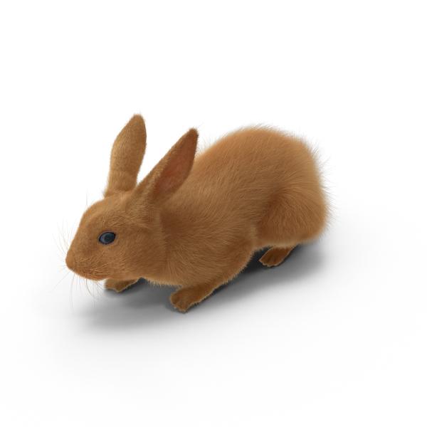 Rabbit Object