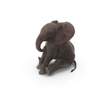Baby Elephant Sitting PNG & PSD Images