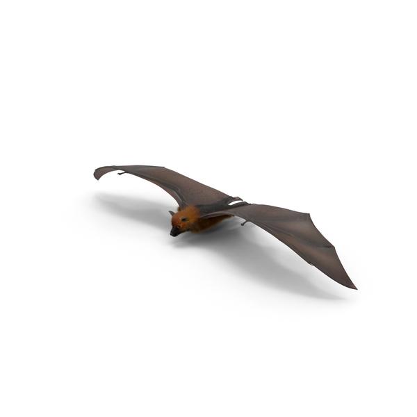 Fruit Bat Flying Low Object