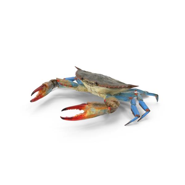 Blue Crab Object