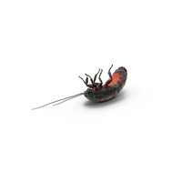 Hissing Cockroach PNG & PSD Images