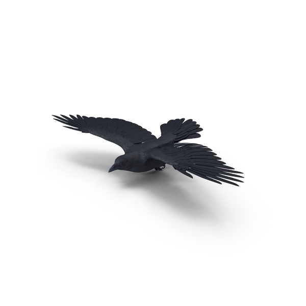 Crow PNG & PSD Images