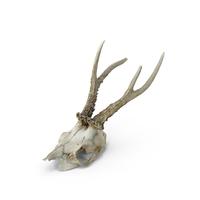 Deer Skull PNG & PSD Images