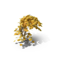 Yellow Ivy PNG & PSD Images