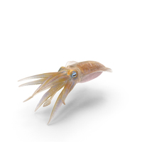 Squid PNG & PSD Images
