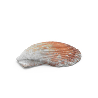 Scallop Shell PNG & PSD Images
