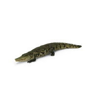 Crocodile PNG & PSD Images