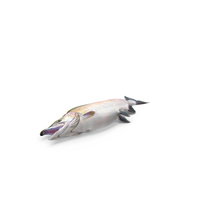 Pink Salmon PNG & PSD Images