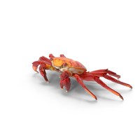Red Rock Crab PNG & PSD Images
